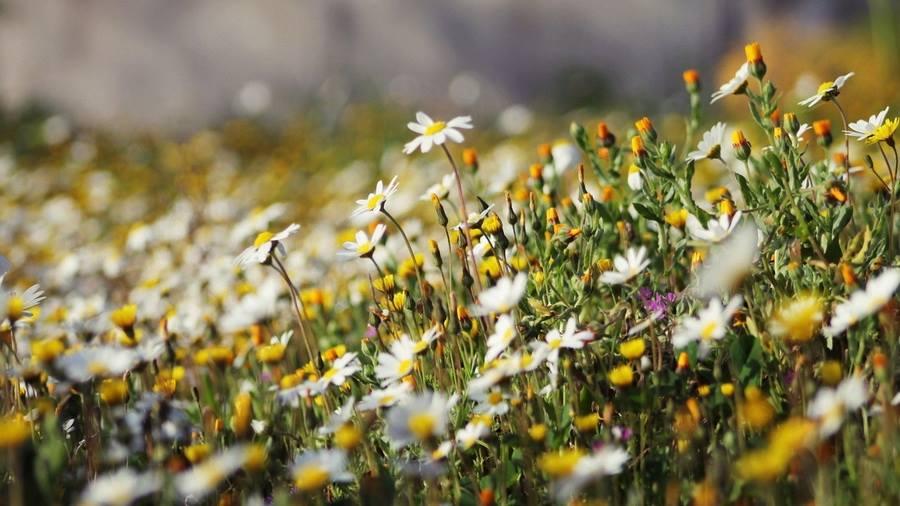 Festival lekovitog i aromatičnog bilja i fitokozmetike